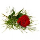 Röd ros med grönt