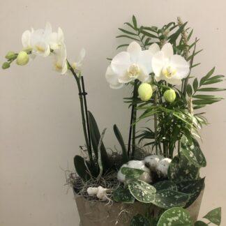 Floristens arrangemang