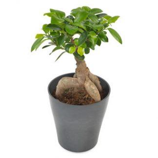 tålig stor grön växt