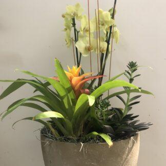 Arrangemang med Krukväxt